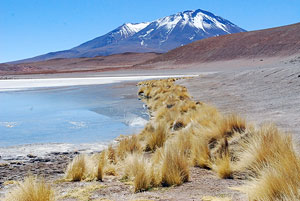 Andean Ichu grass along the shore of Laguna blanca.