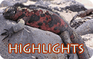 Galapagos Highlights